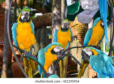Parrots, parrot macaw on branch, botanical garden Nong Nooch, Thailand