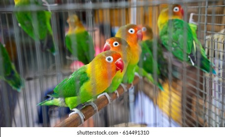 Parrots for sale in Hong kong market