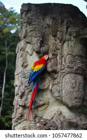 Parrots sitting on traditional mayan steles in Copan, Honduras