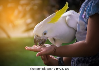 parrot.white macaw parrot.Ara macaw parrot.Parrot eating food on the hand.