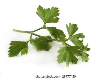 Parsley (flat leaf)