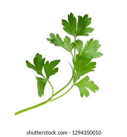parsley fresh herb isolated on a white background.