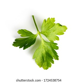 Parsley green branch on a white background close-up, flat lay, top view.