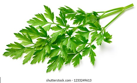 Parsley isolated on white background. Bunch leaves parsley. Fresh raw herbs ingredient food