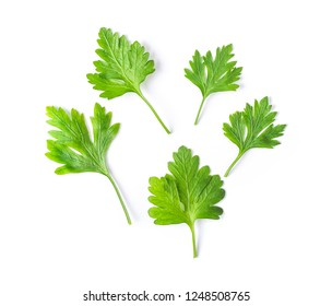 parsley isolated on white background. top view