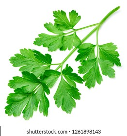 Parsley isolated on white background Clipping Path. Bunch leaves parsley. Fresh raw herbs ingredient food.