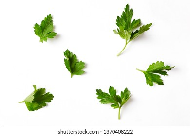 Parsley isolated on a white background. top view