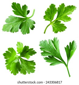 Parsley isolated on white background. Collection