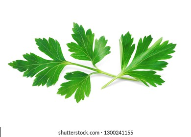 Parsley Isolated on White. Fresh Parsley Herb, Full Depth of Field