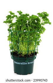 """Parsley isolated on white, """"Petersilie kraus"""" means parsley in German language"""