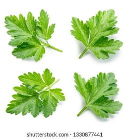 Parsley. Parsley isolated. Top view. Collection.