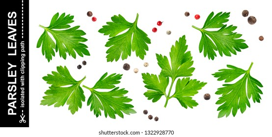 Parsley leaves isolated on white background with clipping path, close-up, collection