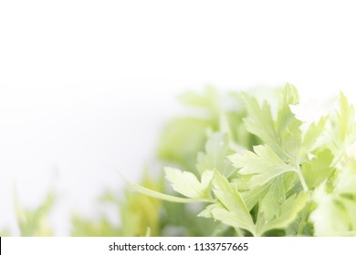parsley leaves in the kitchen