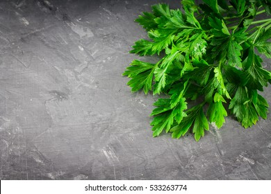Parsley on a gray table. Top view. Parsley background. Copy space. Fresh green parsley. Flat lay. Fragrant raw spice parsley.