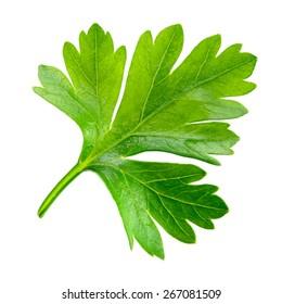 Parsley. one leaf isolated on white background.