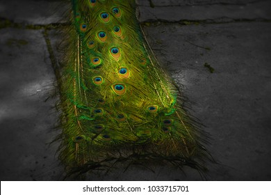Part of beautiful peacock tail in dark, Background, wallpaper, texture.