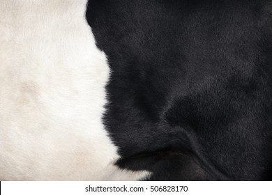 part of black and white hide on side of cow