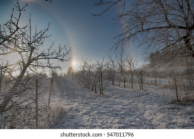 Part of a circular halo around the sun on a cold winter day. Picture taken at an orchard in the Rosalia Region in Burgenland in Austria.