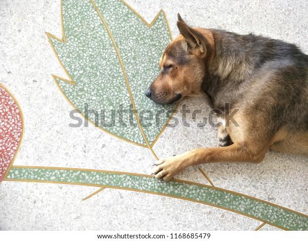 Part Crossbred Dog Sleeping On Terrazzo Stock Photo Edit