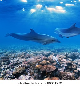 A part of flock of playful dolphins swimming underwater over beautiful coral reef