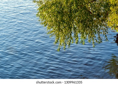 part of a green magnificent tree or bush hangs down over a surface of the water of the river or a pond or the lake