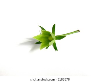 Part of a green plant on a light background as a symbol of a life on the Earth.