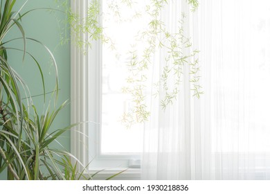Part of the interior, green indoor plants by the window with a translucent white curtain