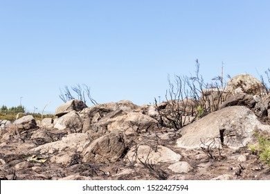 Part of the Fóia mountain after a forest fire