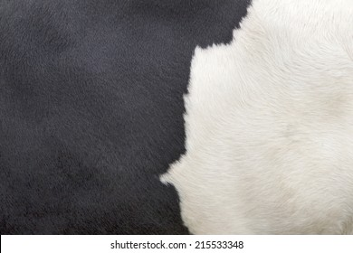 part of the pattern on hide of black and white cow