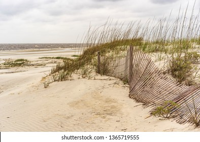 Part of sand fence blown down on grassy dune along beach on a barrier island, for coastal and environmental themes