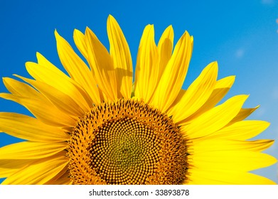part of sunflower as background