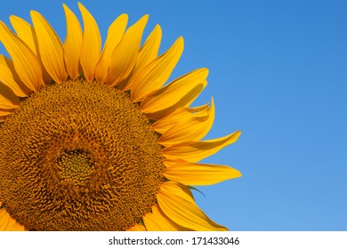 Part of sunflower with copy space