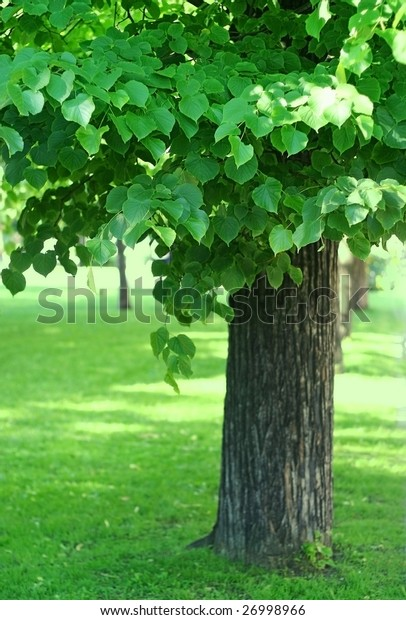 Part of tree with green foliage