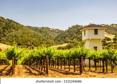 Part of vineyard with watchtower in Sonoma Valley, northern California, USA, for themes of agriculture and surveillance, fire detection, tourism