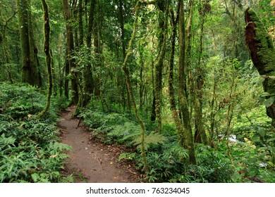 Part way to tropical jungles of Southeast Asia. Subtropical forest landscape in Thailand. Tropical rainforest, Doi inthanon national park, Thailand. Selective Focus.