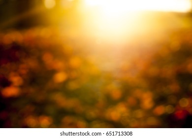 part of a yellow leaf-dripping maple leaf on the other fallen leaves. Autumn season and sunset. The photo is out of focus, defocused