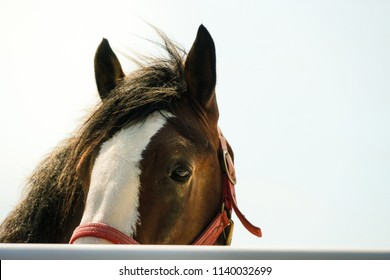 Partial face of a Clydesdale horse on in bright sun