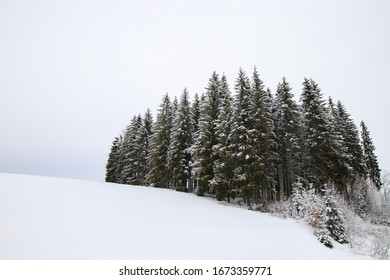 Partial forest on a hill