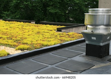 partial green roof top covered with sedum plants contrasted with a standard flat composition roof