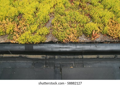 partial green roof top detail  showing the boundary