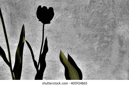 f560517a5fef1 Tulip Shadow Images, Stock Photos & Vectors   Shutterstock