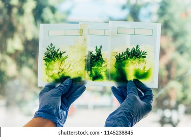 partial view of scientist in latex gloves examining grass in packages in agro laboratory