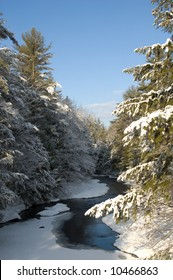 Partially frozen creek meandering through a pine forest after a snowfall, with morning light.