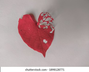 Partially hollow red leaf that are heart shaped.