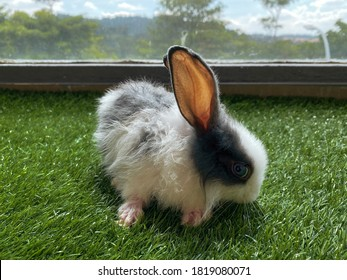 A partially wet black and white rabbit under the sun.