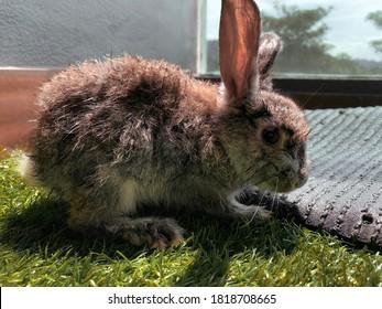 A partially wet rabbit under the sun.