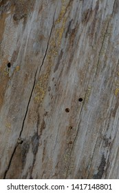 Particular texture of tree bark