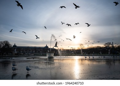 A partly frozen fountain in the Luxembourg Garden surrounded by birds and ducks at sunset