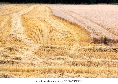 Partly harvested golden field with tracks in France