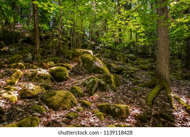 Partly sunny forest view with moss, stones, bright leafs and trees.
